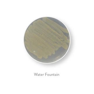 bacteria all 30-22.jpg
