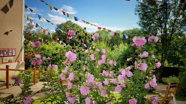 Les roses trémières tout en couleur !