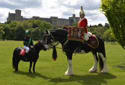 2014-09-05 22-51-34 Gallery - Royal Windsor Horse Show.png