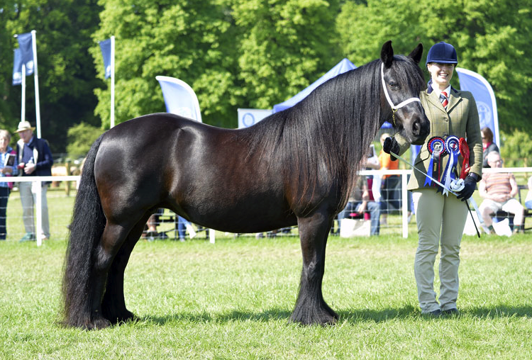 2014-09-05 22-57-38 Gallery - Royal Windsor Horse Show.png