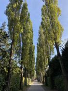 Le cimetière Assistens