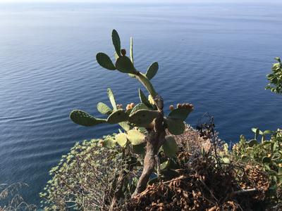 Visiter les Cinque Terre