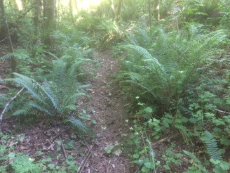 Pruning Forest Trails