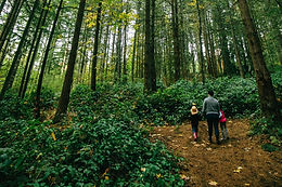 Monthly Walks in Shelton View Forest!