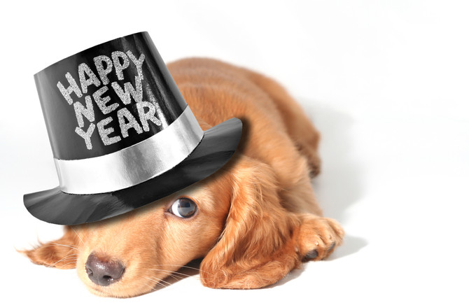 New Years' Resolutions: 5 Resolutions You Can Make For You and Your Dog