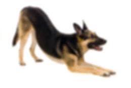The East-european dog on the white backg