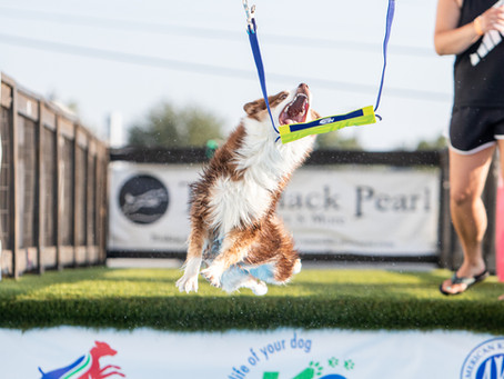 Phoenix Ranked #5 dog in the Junior Division in Air Retrieve/Earns Another Invite to Regionals!