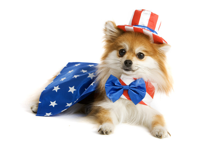 Prepare Your Dog for the 4th of July