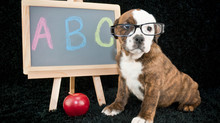 Order Up! Why Order Matters in Dog Training