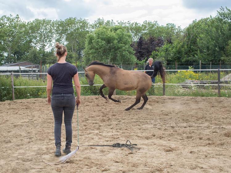 Performance-Horsemanship_062.jpg