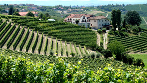 6 Essential Tips When You Go on Wine Tastings and Tours