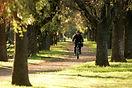 Cycling between trees_196.JPG