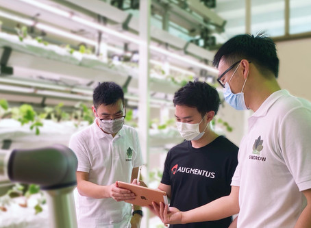 How Singrow Leverages The Augmentus Platform to Automate Strawberry Pollination and Harvesting