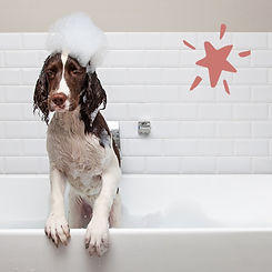 Unleashed Gifts Dog In Bath.jpg