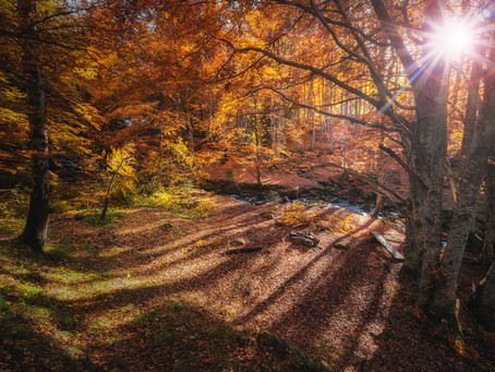Autumn Equinox and the pursuit of balance