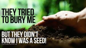Buried or Planted