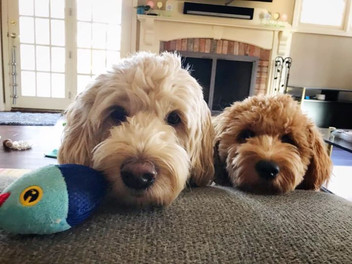 Ollie and Penny