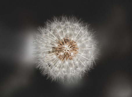 Dandelions, Viruses & You