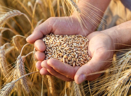 Good Friday Grain