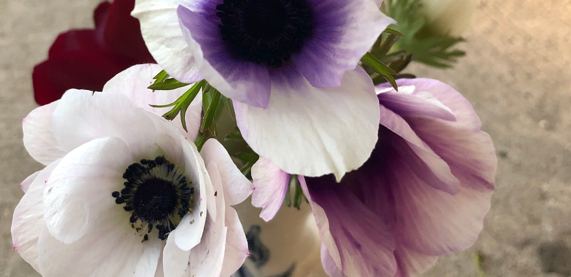 Anemone flowers in a bud vase