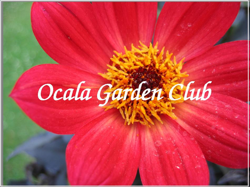 Ocala Garden Club Sponsor Logo