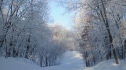 Dayton Oaks Winter