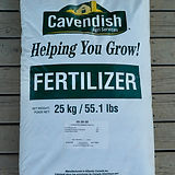 cavendish starter fertilizer