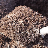 mocha brown hemlock mulch.JPG