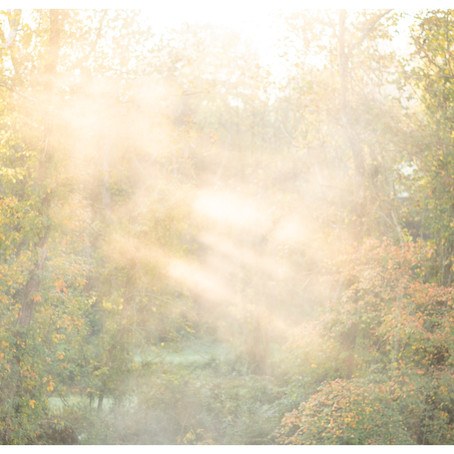 Early Morning Fall Maternity Session