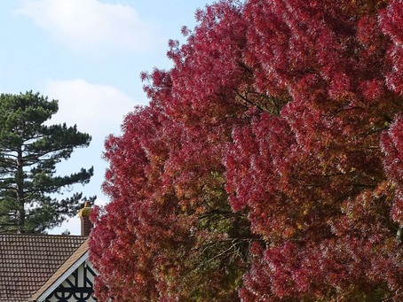 Autumnal Colours...