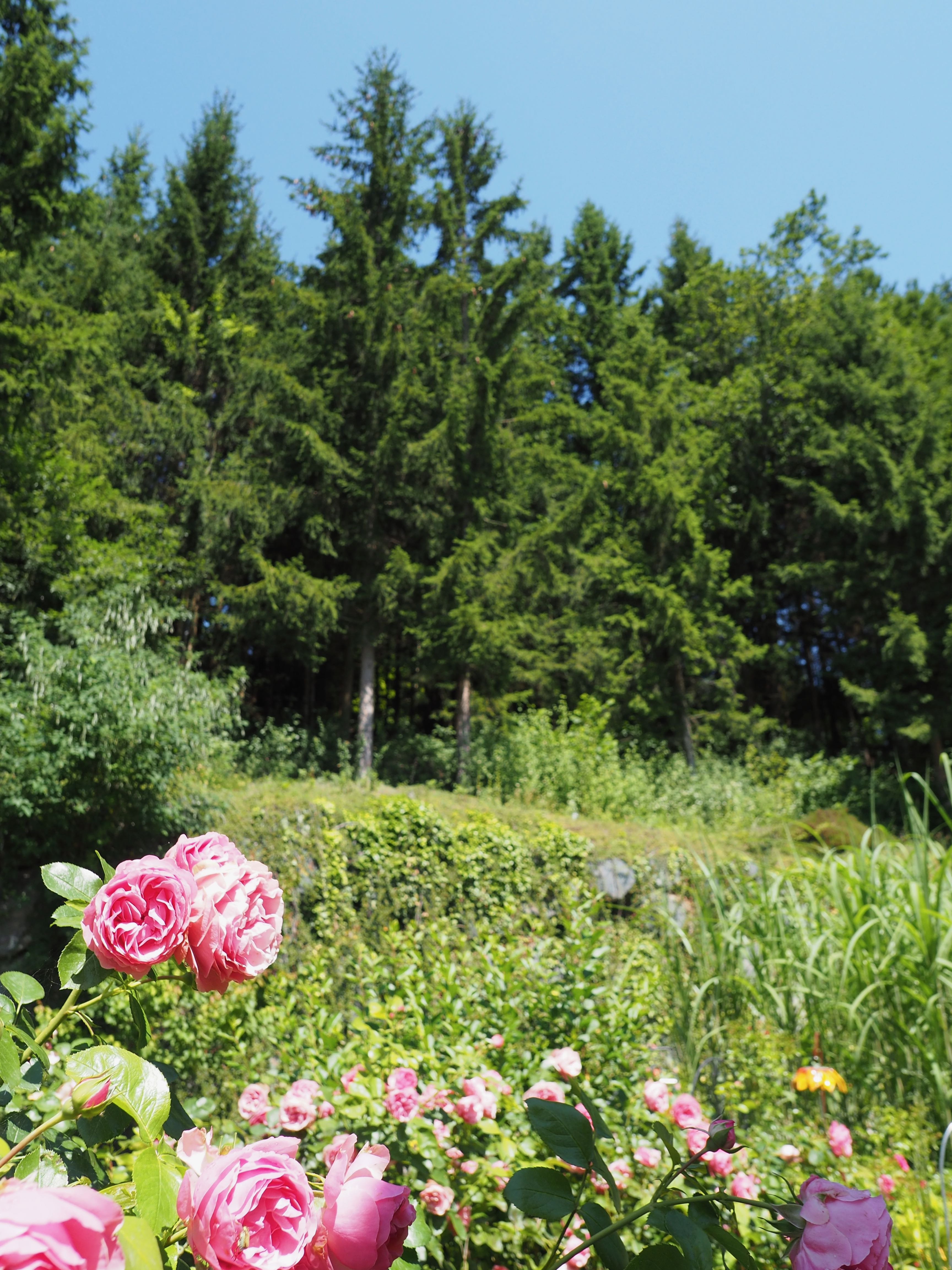 Rosen und Wald