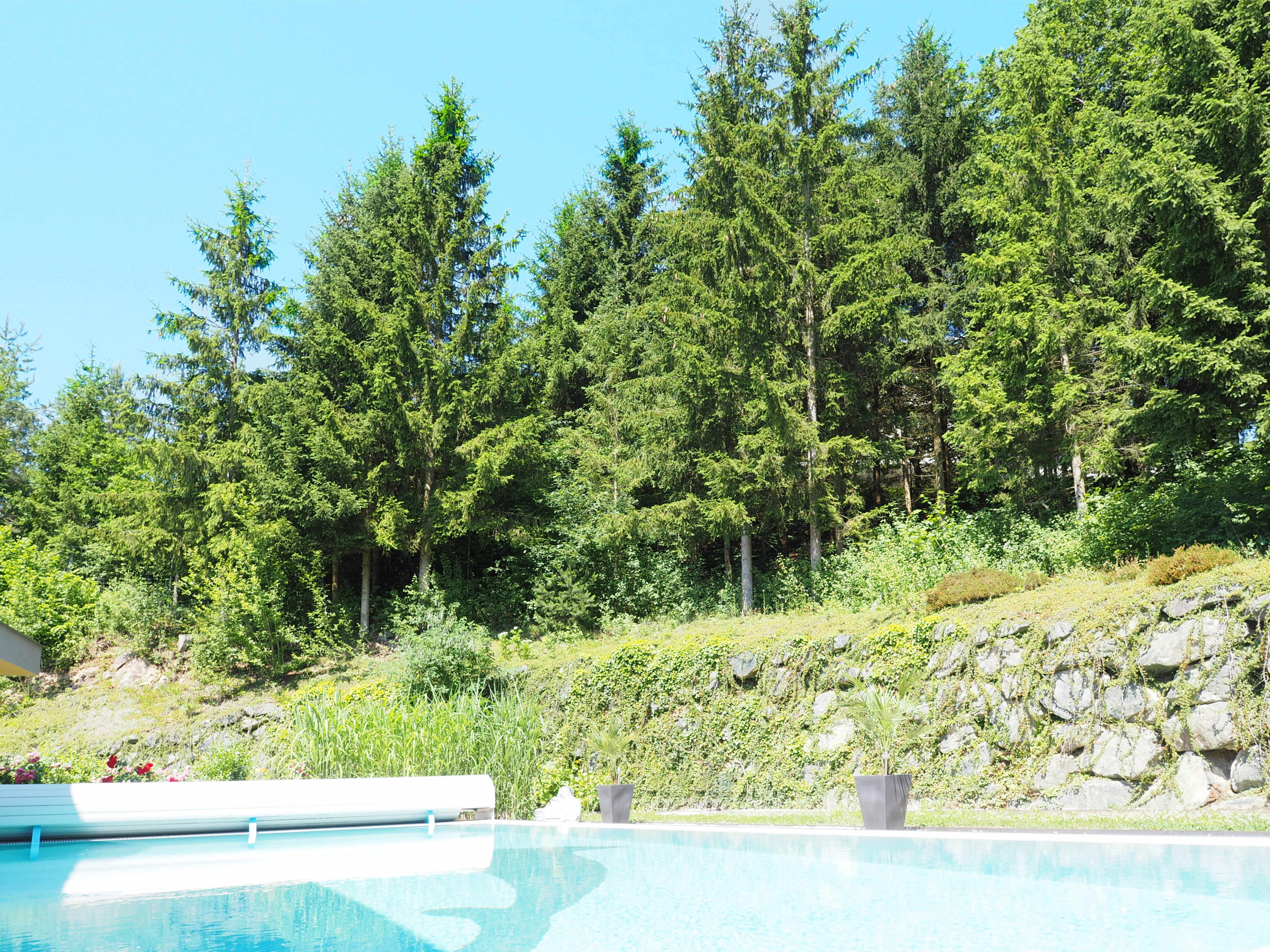 Swimmingpool und Wald