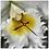 Thumbnail: Dream Orchid Clock