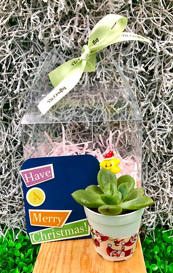 Wrapped Succulent Terrarium Christmas Gift Set