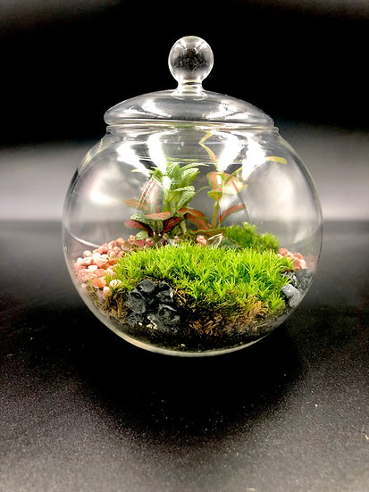 Small Glass Lid Terrarium