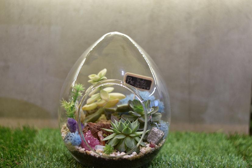 Succulents Egg Terrarium