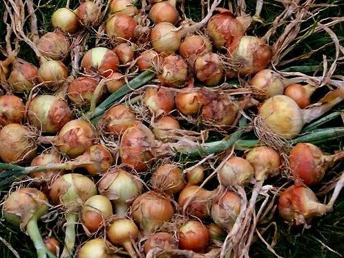 Yellow Onion - Bawang Bombay (250g)