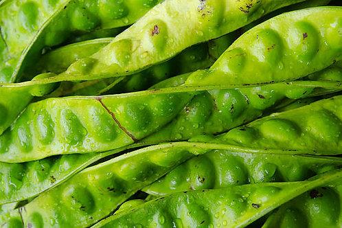 Petai Beans (Parkia speciosa) - Petai or Pete (p.pc)
