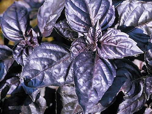 Purple Basil Fresh 50g
