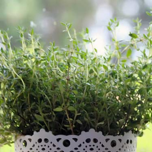Thyme (Thymus vulgaris) (100g)