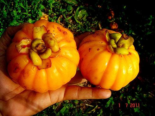 Garcinia Fruit Slices, Sun Dried (50g)
