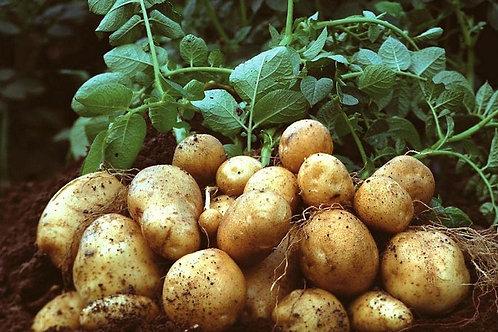 Potatoes - Kentang (250g)