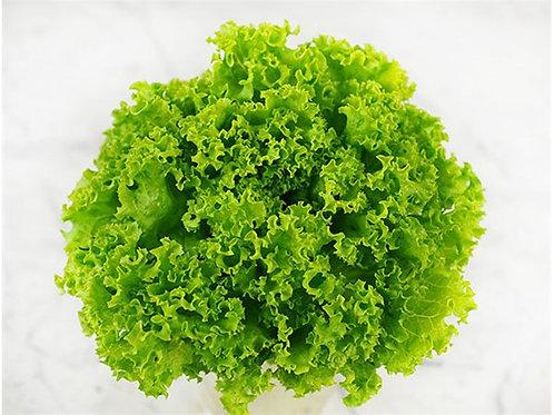 Ruffle-Head Lettuce - Selada Keriting (250g)