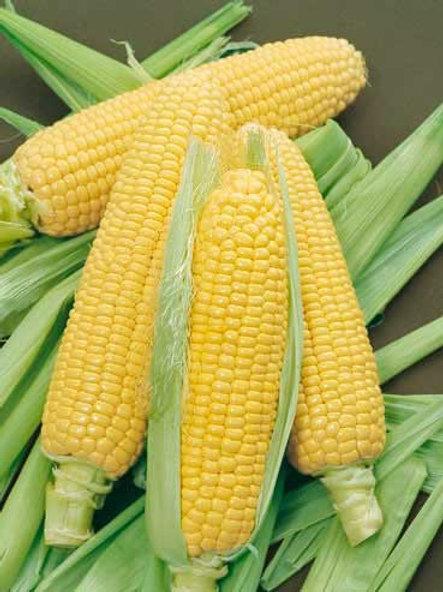 Yellow Corn - Jagung Kuning (1kg)