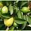 Thumbnail: Guava Leaf Tea (50g)