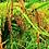 """Thumbnail: """"Cibagelit"""" Red Rice - Beras Merah Cibagelit (1kg)"""