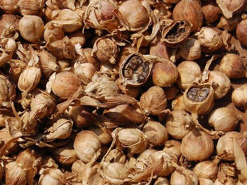 White Cardamom or Javanese round cardamom (Amomum compactum S.) - Kapulaga (50g)