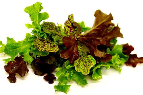 Salad Mix - Selada Campur (250g)