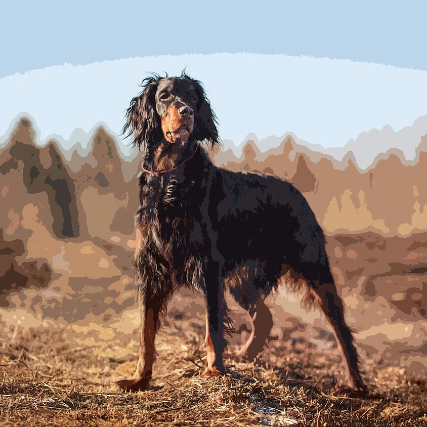 Addestramento Cani su beccacce in Scozia con soli 7,99 €