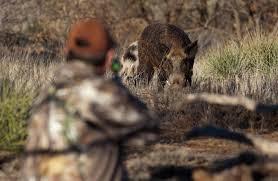 Battute di caccia  al cinghiale